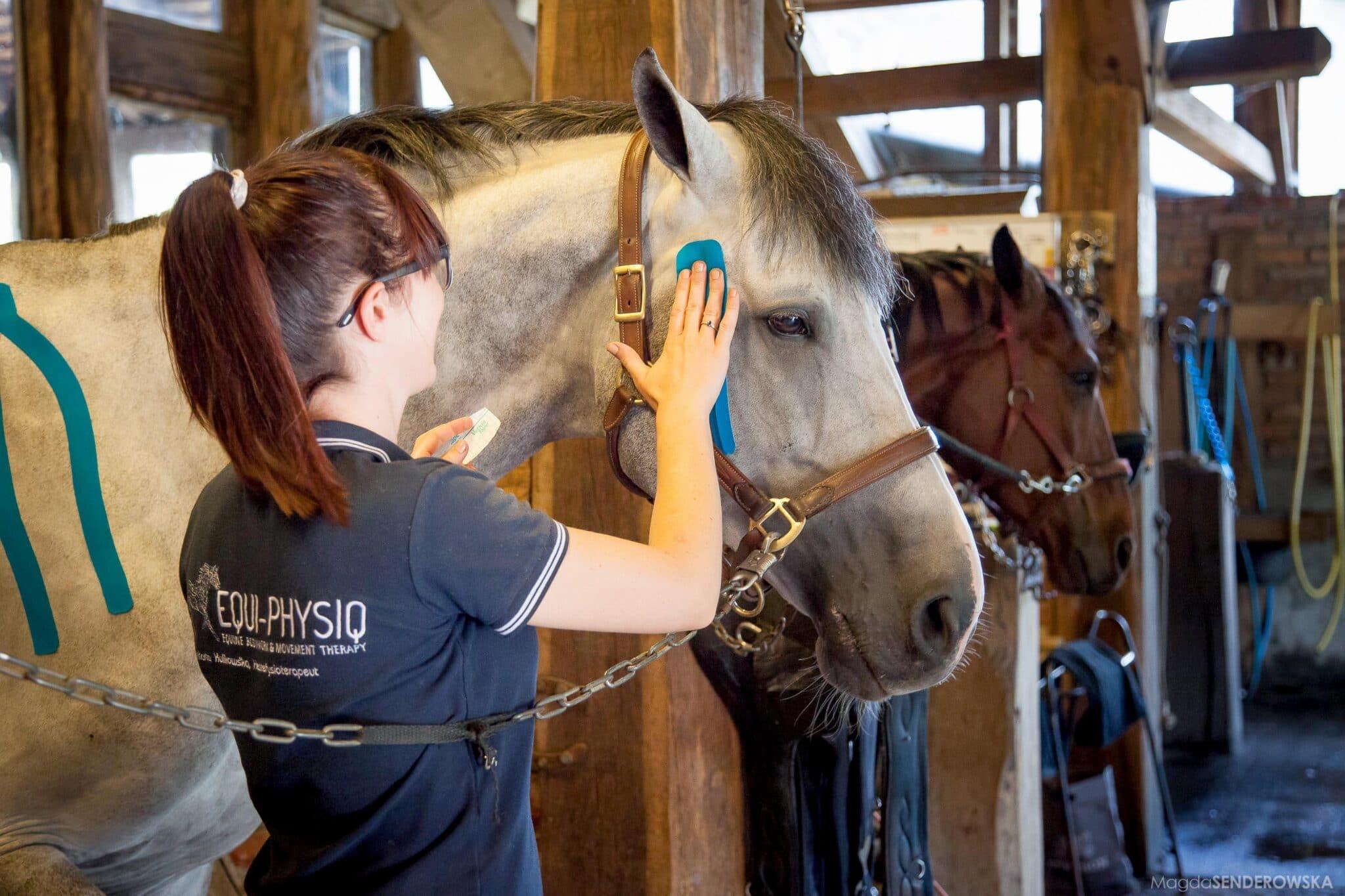 Hestefysioterapi