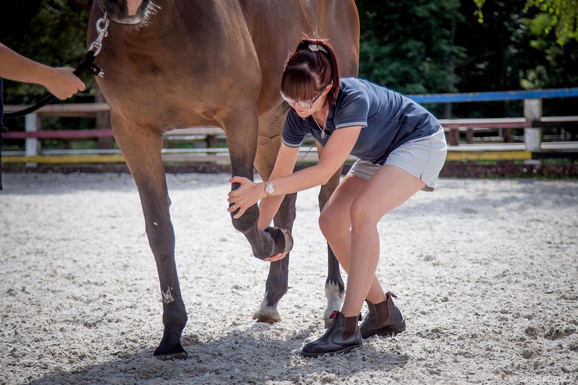 Genoptræning hest