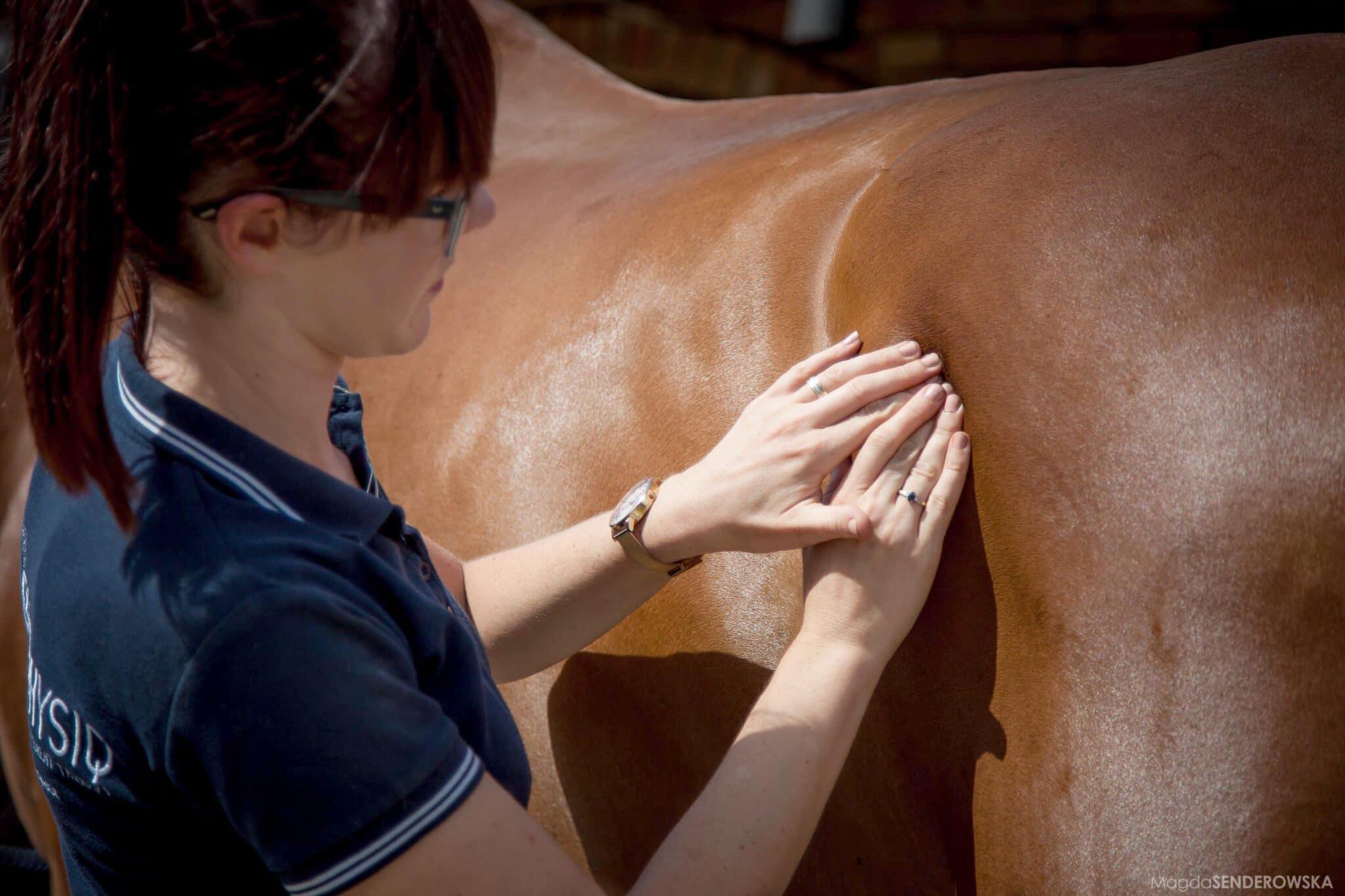 Behandlinger af heste